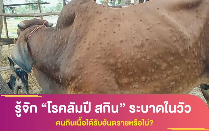 """รู้จัก """"โรคลัมปี สกิน"""" ระบาดในวัว คนกินเนื้อได้รับอันตรายหรือไม่?"""